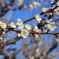 Весна :: Юлия Заря