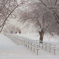 Морозный день. :: Евгений Суханов