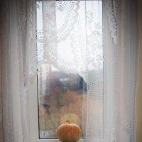 На окне :: U. South с Я.ру