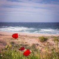 Маки и море :: Эльмира Суворова