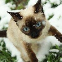 Лапкам холодно, возьми меня на ручки. :: Alla Kondakova