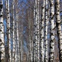 Последний снег :: Владимир Фещенко