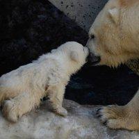 Мама и дочка 2. :: Светлана Винокурова