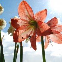 Весна на окошке :: Нелли *