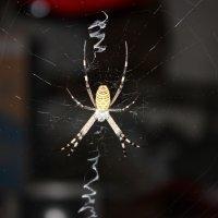 паук :: Dmitriy Popov