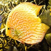 солнечная рыба :: pavel belov