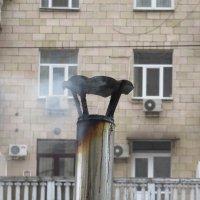 Очевидное-невероятное :: Сергей Рубан