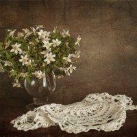 Первоцветы. :: Анна Тихомирова