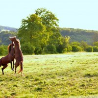 мои лошадки :: Татьяна Шульц Schulz