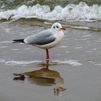 В зеркале воды ... :: Михаил Юрин