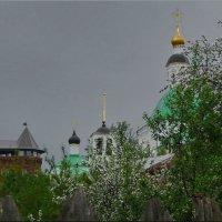За забором! :: Владимир Шошин