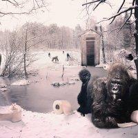 Обезьяны в снежном лесу :: Inga Керрен