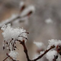 Зима? :: Сергей Борденов