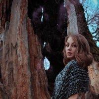 Tree of Wishes :: Sandra Snow