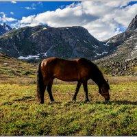 Конь, который меня привез. :: Владимир