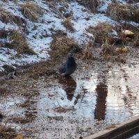 """"""" ищу чистую воду..."""" :: Фотогруппа Весна."""