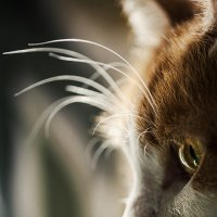 кошка :: Валерий