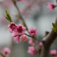 Цвет персика :: Natalia Fedina