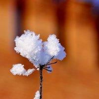 Цветок :: Александр Войтович