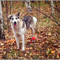 Веселый пес нашел красивые грибы :: Татьяна Губина