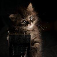 котограф :: Юрий Коротун