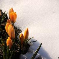 Весна пришла.. :: Anna Stroinova