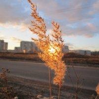 солнышко запуталось в траве :: елена