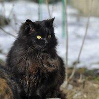 Кошка-копилка :: Ольга Винницкая (Olenka)