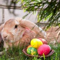 Пасхальный кролик)) :: Ирина Шуба