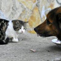 Надеюсь, Вы не против ?!!! - сказал пес .....))) :: Ольга Винницкая (Olenka)