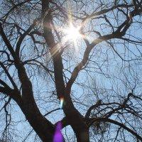 Солнце :: Katrin Trusenkova