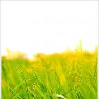 Трава на закате :: Олег Серженко