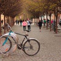 Велосипед :: Юрий Ващенко