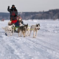 Volga Quest :: Сергей Щербатюк