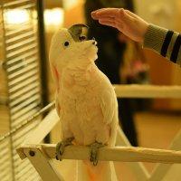 Раздраженный попугай :: anton dsgn