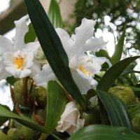 Ах,какой аромат орхидей.... :: Дина Нестерова