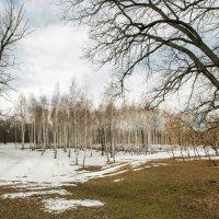 начало весны :: Андрей ЕВСЕЕВ