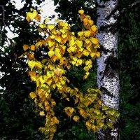 Осень скоро... :: ЮРИЙ ТВЕРДОХЛЕБОВ