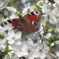 Бабочка2 :: Наталия Зверева