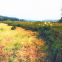 белоярка-лето :: Андрей Афонасьев