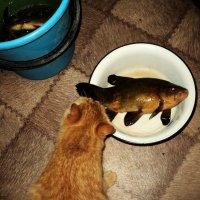 Рано - рано утром чувствуя еду, Кот побрёл на кухню: Может украду? :: Ольга Кривых