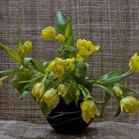 весенние тюльпаны :: Наталья Крюкова