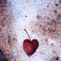 Cherry heart :: Olga Zhuravel