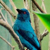 ZooPraha [bird] :: Ira Bur