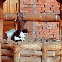 Кот ученый :: Анна Медведева