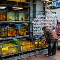 рынок аквариумных рыб в Гонконге :: Сергей Андрейчук