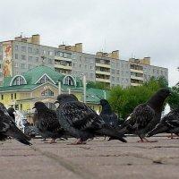 Много птичек... :: Валерий Викторович РОГАНОВ-АРЫССКИЙ