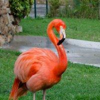 Фламинго :: Alexey Bogatkin