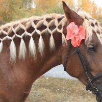 Гламурный  конь :: Виктор