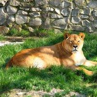 Ялтинский зоопарк. Весна. :: Анна Выскуб
